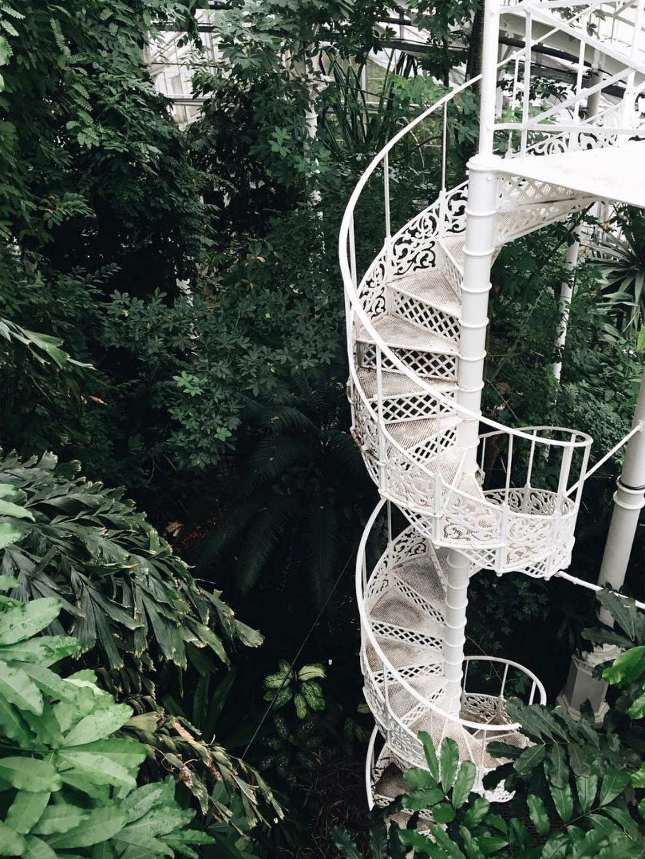 a photograph of a white staircase in the middle of green plants