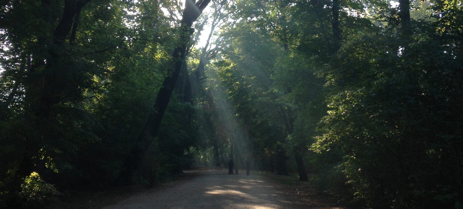 View of a park and the sunlight falling through leaves of trees onto the ground